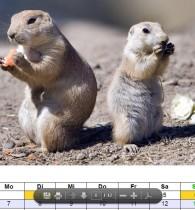 Kalender mit Tieren für das Jahr 2013