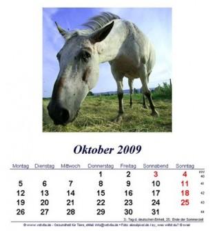 kostenloser Tierkalender für das Jahr 2009